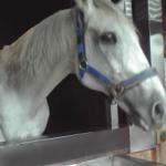 エイシンオンワード 神馬になったサラブレッド