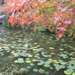 岐阜にもあったモネの池