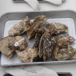 三重県 浦村牡蠣食べ放題で牡蠣三昧