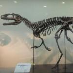 岐阜県立博物館で福井の恐竜の話を聞く