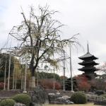 古都京都 東寺の紅葉と立体曼荼羅