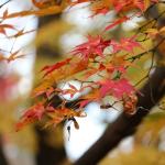 古都京都 東福寺通天橋の紅葉をめでる