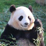 和歌山 アドベンチャーワールドでパンダ三昧 4