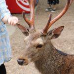 ゴールデンウイークは奈良へ 春日大社・奈良公園